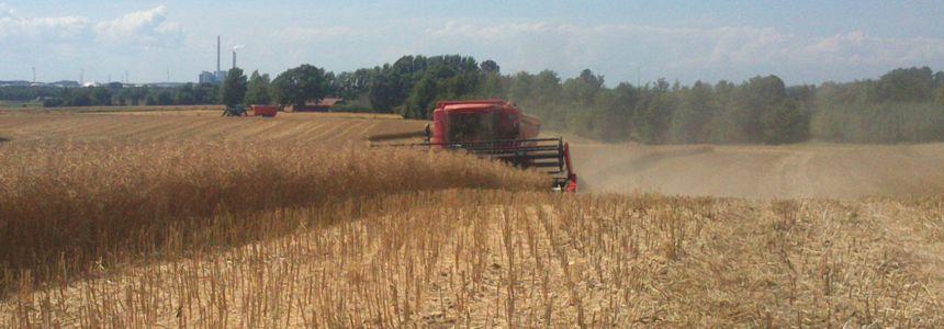 Hjælp til tærskning af korn - evt. med egen mejetærsker