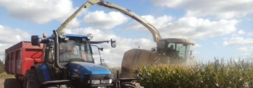 Landbrugshjælper - Tærskning af majs til ensilering