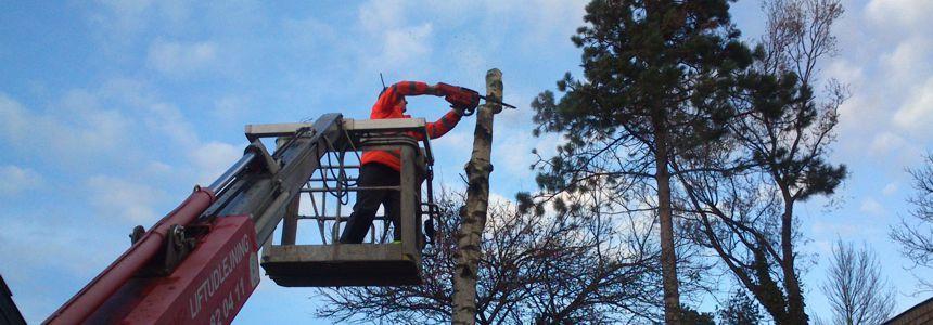 Træfældning og Topkapning med lift
